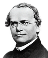 gregor johan mendel essay Science essays: gregor mendel genius of genetics search browse essays join now login support tweet browse essays / science gregor mendel genius of genetics this research paper gregor mendel genius of genetics and other 63,000+ term his given name was johann he was the son of a.
